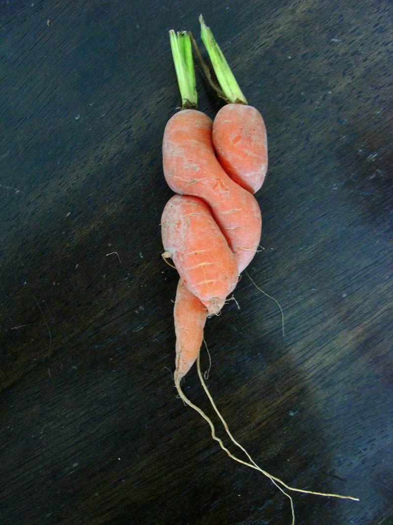 Lovin' carrots