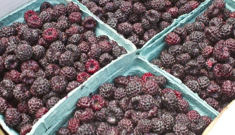 Raspberries_jeni